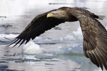 Il Volo dell'Aquila