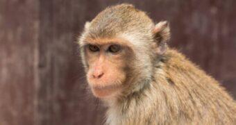 L'Esperimento delle Cinque Scimmie